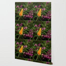Dewy Poppy Bud Wallpaper