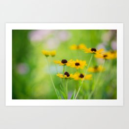Black Eyed Susans in Summer Art Print