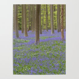 Bluebell Forest 3 Poster