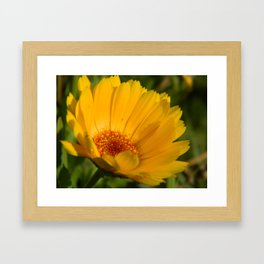 Yellow Daisy Flower Framed Art Print