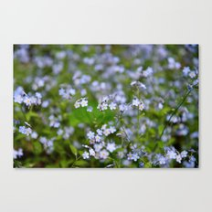 Forget-me-not Close up Canvas Print