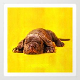 Cane Corso - Italian Mastiff Puppy Art Print