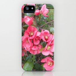 Quince flower iPhone Case
