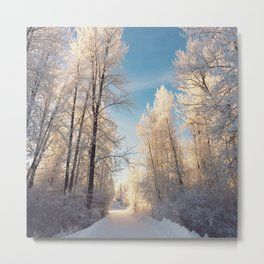 Let There Be Light - Frost Trees in Winter Metal Print