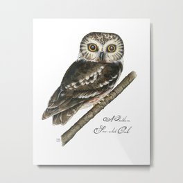 Northern Saw-whet Owl Metal Print