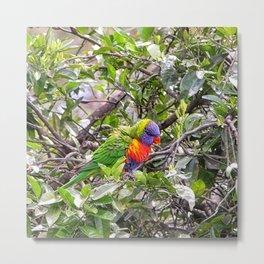 Rainbow lorikeet in tree Metal Print