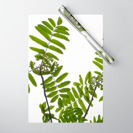 Green Rowan Leaves White Background #decor #society6 #buyart Wrapping Paper