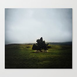 a lonely tree in iceland. Canvas Print