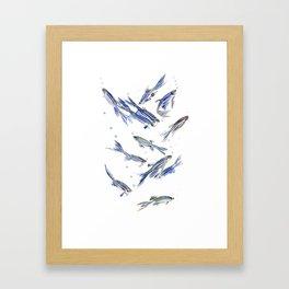 Fish art Danio zebra fish, gray-blue aquatic beach home decor Framed Art Print