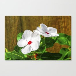 Vincas in the Morning Canvas Print