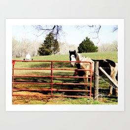 painted horse Art Print