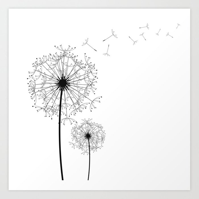 Black And White Dandelion Sketch Art Print By