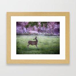 Deer at Capitol Reef Framed Art Print