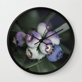 Blueberries ripening Wall Clock