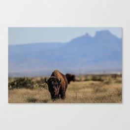 Bufalo, Bisonte, landscape Canvas Print