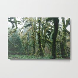Forest.Moss.Ancient.Old Growth.Trees.Olympic Peninsula.Washington.PNW Metal Print