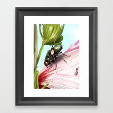 Fly on a flower 15 Framed Art Print