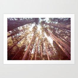 Forest Sky Art Print