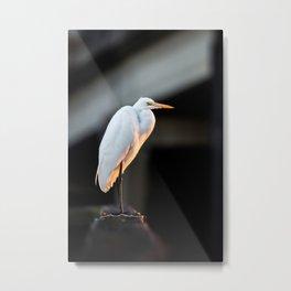 Great Egret at Sunset Metal Print