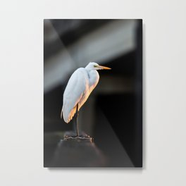 Great Egret at Sunset Metal Print