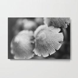 Shaggy Ink Cap Mushrooms 5 Metal Print