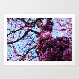 Spring has arrived - Cercis siliquastrum Art Print