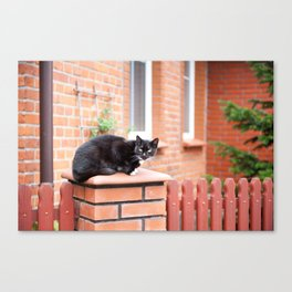 lonely stray black cat sitting Canvas Print