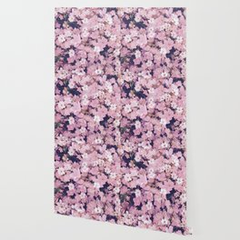 blossom blooming pink flower texture pattern abstract background Wallpaper
