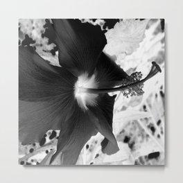 Beauty of the Negative Metal Print