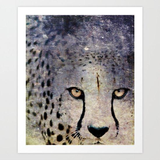 Cheetah, Namibia Art Print
