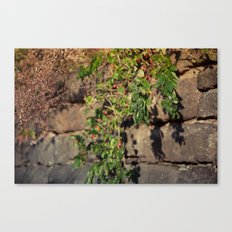 Leaves n' berries Canvas Print
