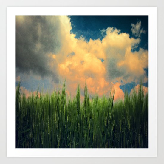 barley field Art Print