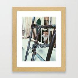 istanbullu kedi Framed Art Print