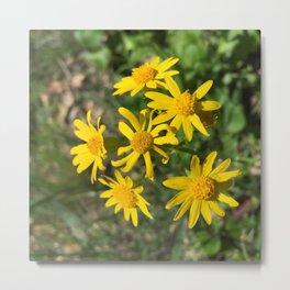 Eldorado Spring Flowers Metal Print