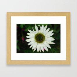 Broken Petal, Daisy Framed Art Print