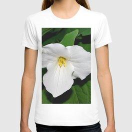 Trillium in the spotlight T-shirt