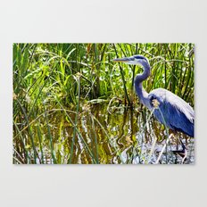 Great Blue Heron In The Wetlands Canvas Print