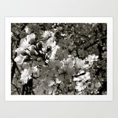 Places in Black & White: Plum Tree 19 Art Print