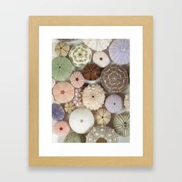 Urchin A Plenty... Framed Art Print