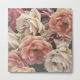 Great Garden Roses,peach Metal Print