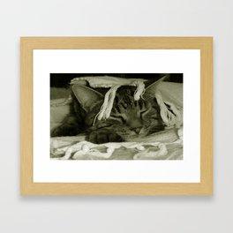 Cat Nap with Diesel Framed Art Print
