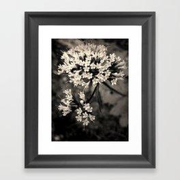 Valeriana sitchensis Framed Art Print