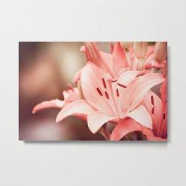 Flowering Lilium plant sepia toned image Metal Print