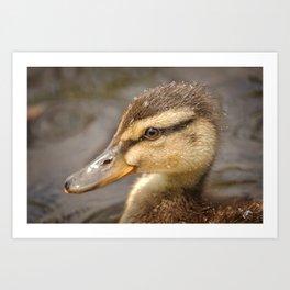 Wet Duckling Art Print