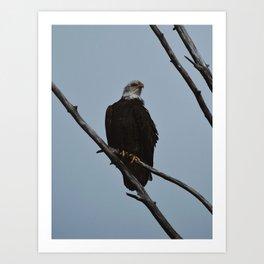 Spring Eagle Art Print