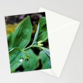 Solomon Seal Unfurling Leaves, Botanical Fine Art, Nature Print Stationery Cards