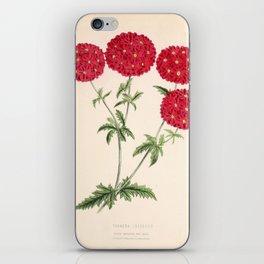 Verbena Lustrous Vintage Floral Flower Hand Drawn Scientific Illustration iPhone Skin