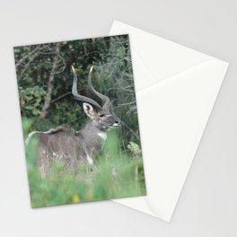 Female Mountain Nyala Antelope Bala Mountains Ethiopia Stationery Cards