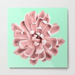 Pink Succulent Plant on Cyan Metal Print