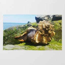 Whelks by the Bay Rug
